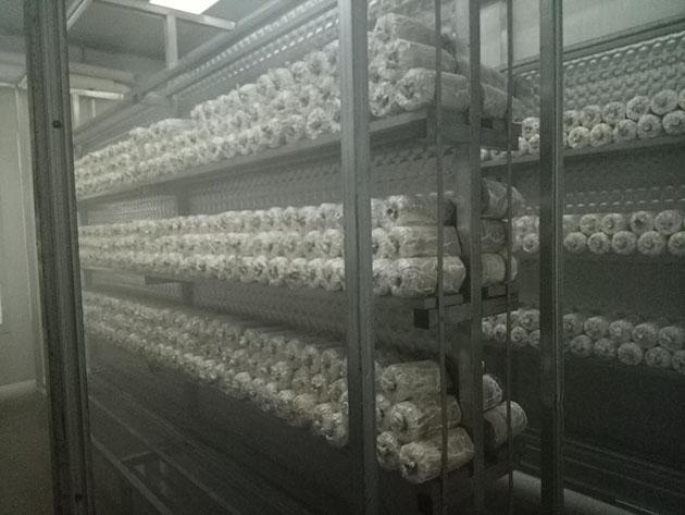 【协会简讯】协会会员参观广州市展康农业有限公司的中山大学生物技术灵芝基活动